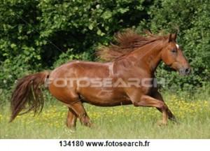 Le Frederiksborg dans tout sur les races frederiksborg-cheval-pre_134180-300x216